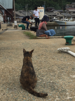 cat life is tough at Ainoshima_soulstir1