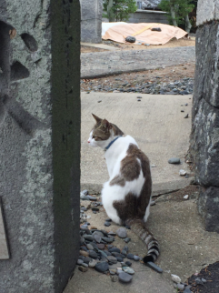 cat life is tough at Ainoshima_soulstir2