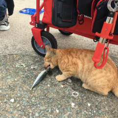 cat life is tough at Ainoshima_soulstir3