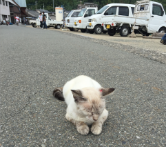 cat life is tough at Ainoshima_soulstir5