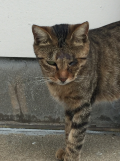 Unhealthy cat at Ainoshima_soulstir2